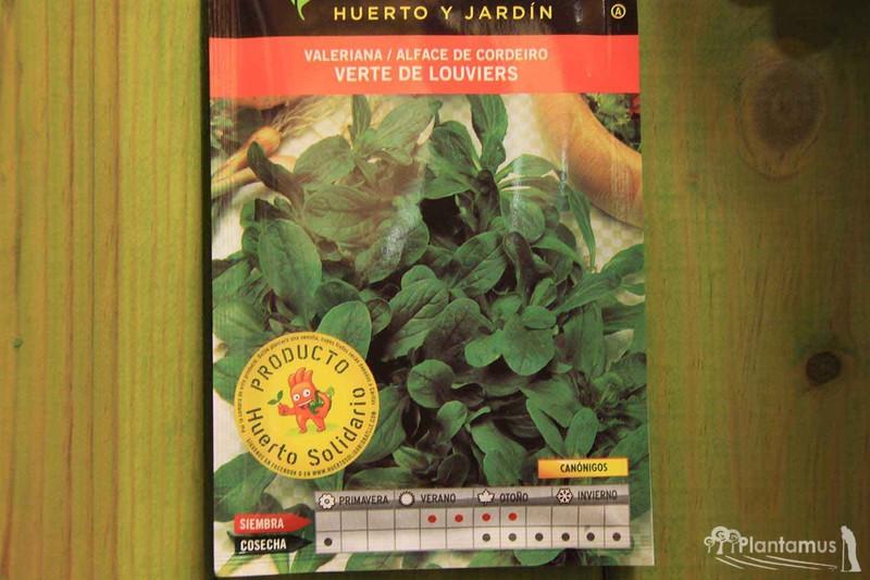 como sembrar semillas de melisa