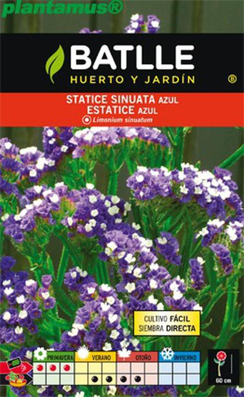 50 Semillas de Estatice Sinuata Limonium Sinuatum